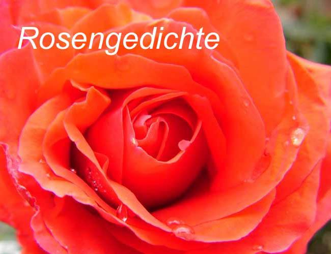 Rosengedichte